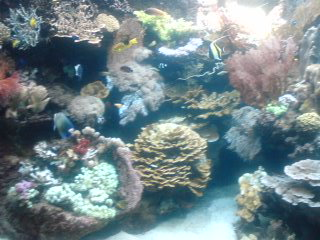 aquarium.jpg