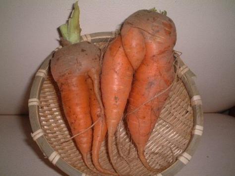carrotsperv