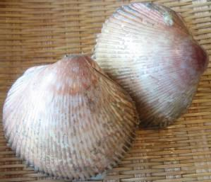 torigai-shellfish