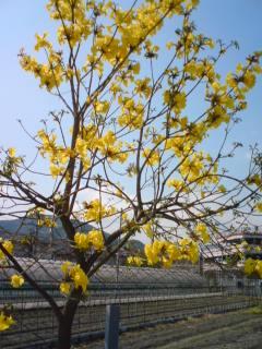 flower-tree3