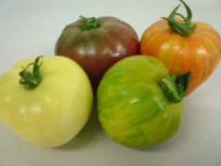 AGRI-TOMATO1
