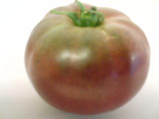 AGRI-TOMATO2