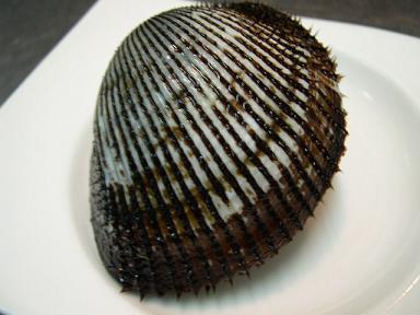 shell striped ark