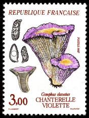 timbres-gastronomie-champignons-chanterelle