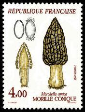 timbres-gastronomie-champignonsmorille