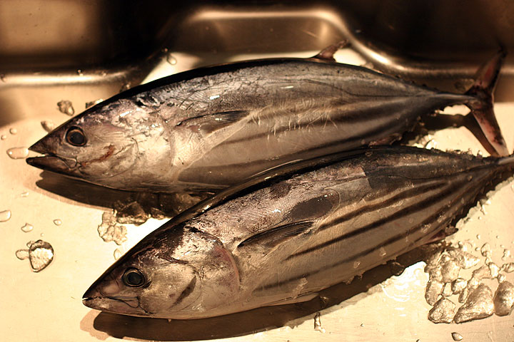 Seasonal fishes 2 katsuo bonito shizuoka sushi for Fish for sushi