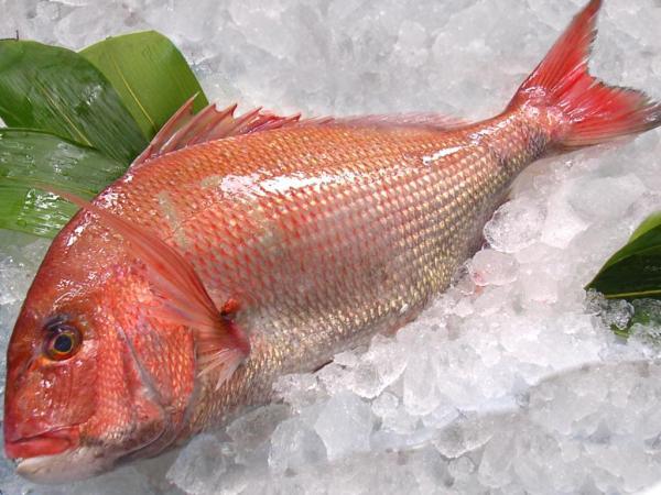 Japanese seasonal fish tai madai seabream shizuoka gourmet for Japanese fish names