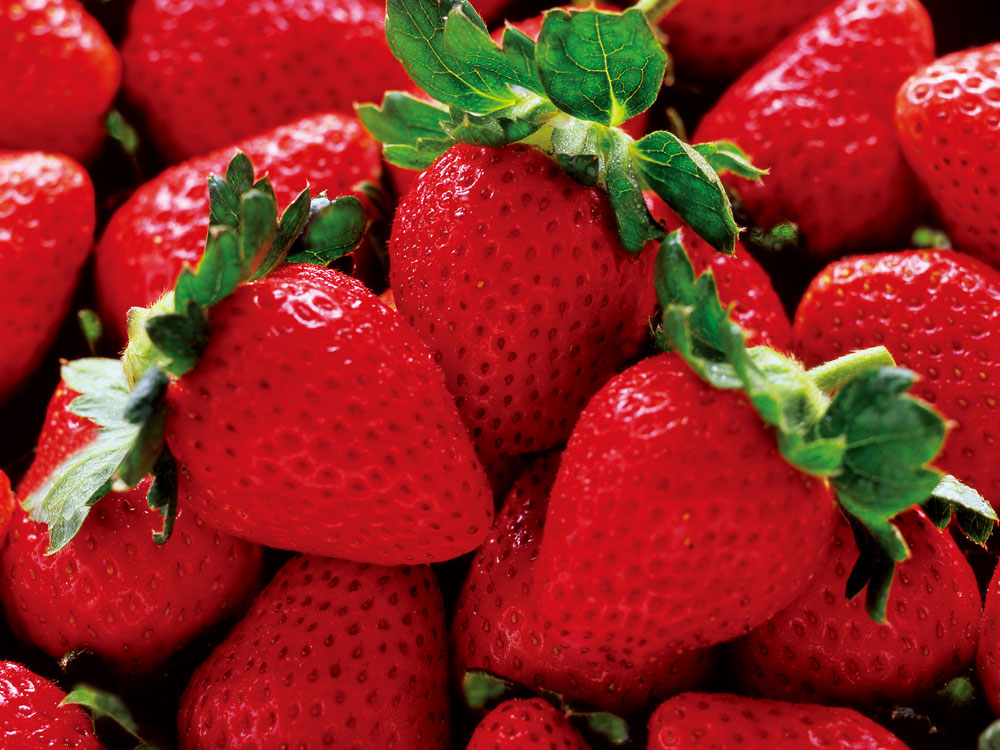 Strawberries Facts Tips Shizuoka Gourmet