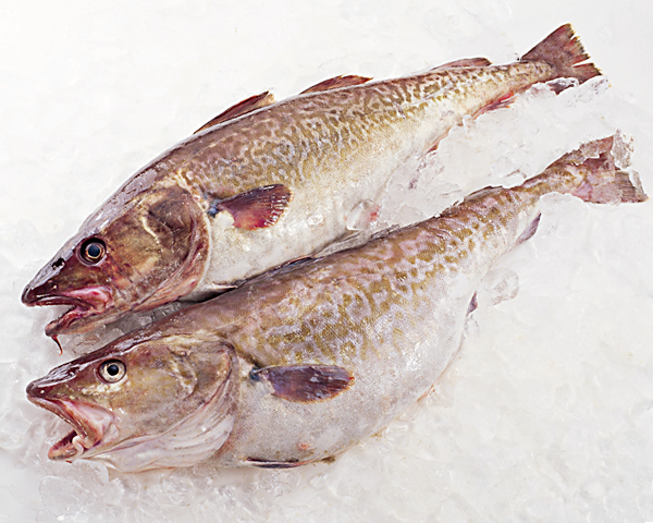 Is Cod a Healthy Fish to Eat?
