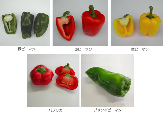 Vegetables Facts Tips 17 Peppers Paprika Shizuoka Gourmet
