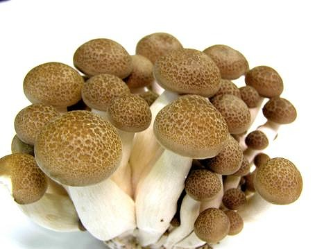 Shimeji mushrooms: 1 pack or a large fistful