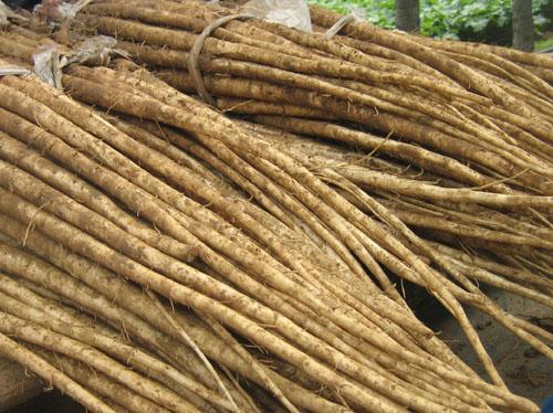Berdock root