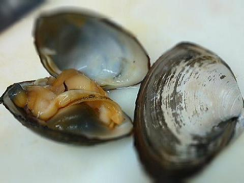 SHIZUOKA GOURMETTag Archives: Round ClamJapanese Shellfish Species 12: Surf Clam-Ubagai-姥貝Japanese Shellfish Species 10: Ark Shell-Bloody Clam-Akagai-赤貝Jaoanese Shellfish Species 9: Round Clam-Hen Clam/BakagaiShellfish Species 9: Round Clam-Hen Clam/BakagaiPopular ArticlesArchivesCategoriesPagesBeerBeer BrewingBlogrollfavourite BlogsFranceGastronomyHealthHollandIrelandJapan Information WebsitesJapanese Cuisine RecipesLiens francaisLife in JapanLiquor ShopsMy favourite websitesMyother Blogs/websitesRecommended sushi restaurants in the World!sakeshochusushiSwedenTravelWhisky日本語のブログ