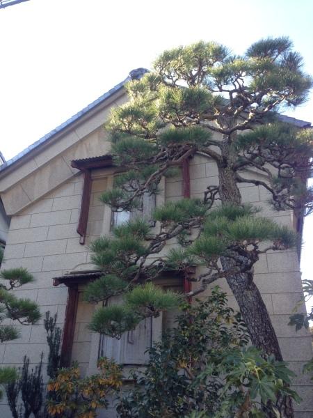 OKABE-8-trees!