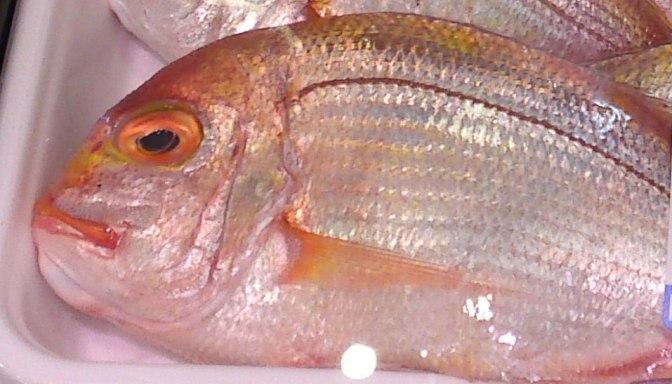 More  Seafood & Fish at PARCHE Supermarket in Shizuoka City!-And Sea Slug!