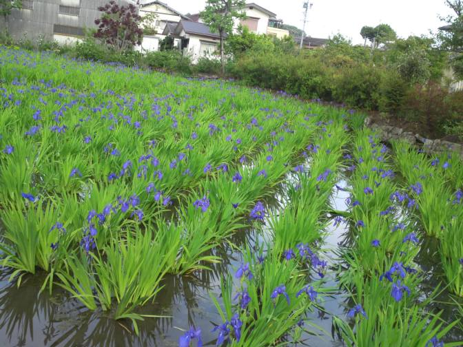 "Private Garden ""Hasu Ike"" in Shizuoka city!"
