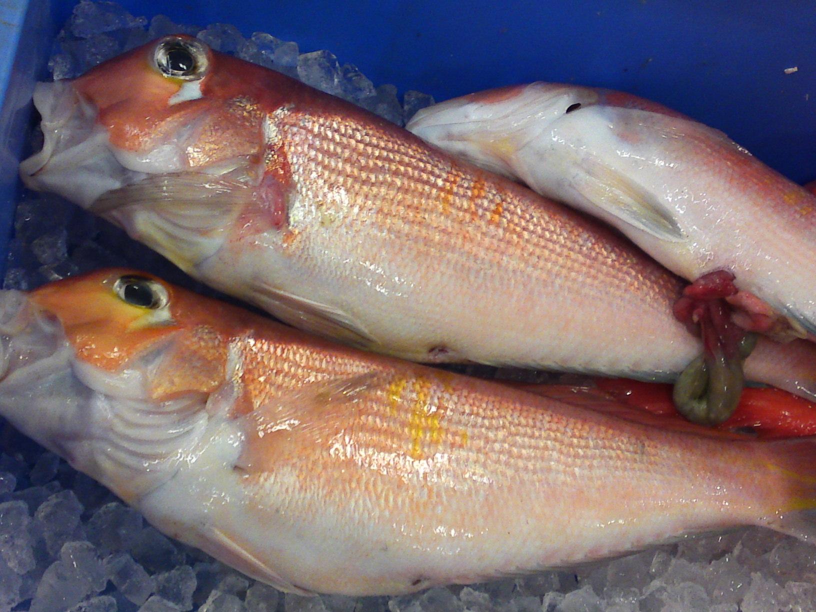 Seabream shizuoka sushi sashimi the other jewels of japan for Kumak s fish