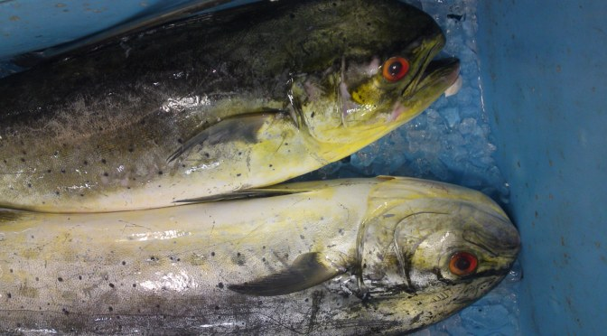 Local Shizuoka Fish & Seafood at Parche Fish Market in Shizuoka City: Including Shiira/Mahi Mahi!