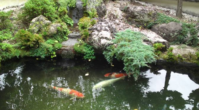 Traditional Japanese Garden in Youshyu Temple (養秀寺) in Shimo, Aoi Ku , Shizuoka City!
