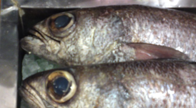 Local Shizuoka Fish & Seafood at Parche Fish Market in Shizuoka City: including Bermuda Fish!