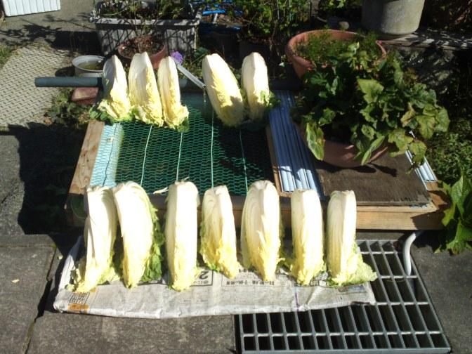 Rural Japan and farming in Ooka, Shimada City!