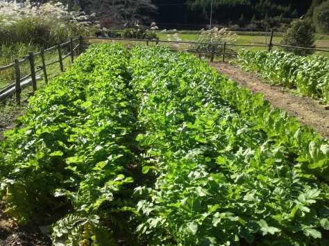 Bildergebnis für soya farm tanegashima