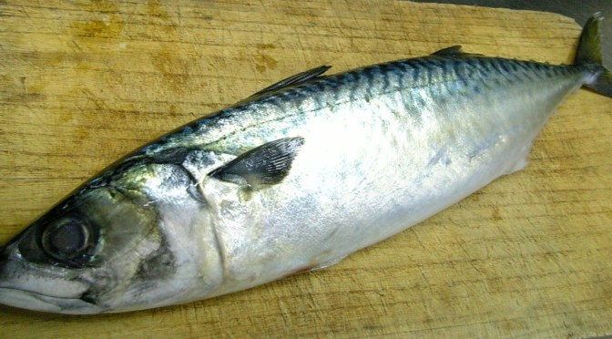 Japanese Fish Species 13: Saba/Mackerel