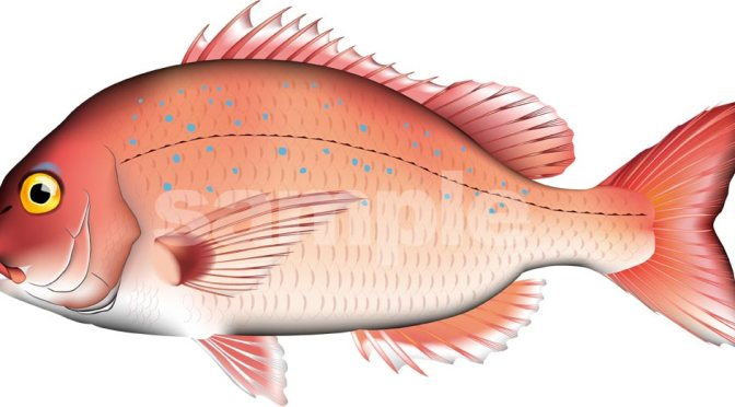 Japanese Fish Species 22: Tai-Madai/Seabream