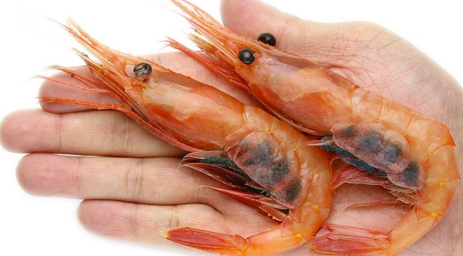 Japanese Crustacean Species 4: Amaebi/Alaskan Pink Shrimp-Pink Shrimp