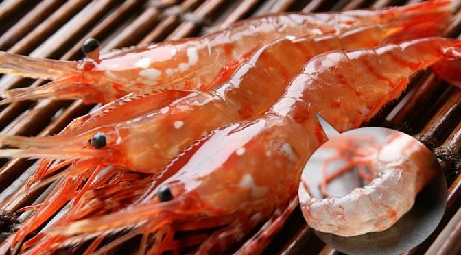 Japanese Crustacean Species 2: Botan Ebi-Large Prawn