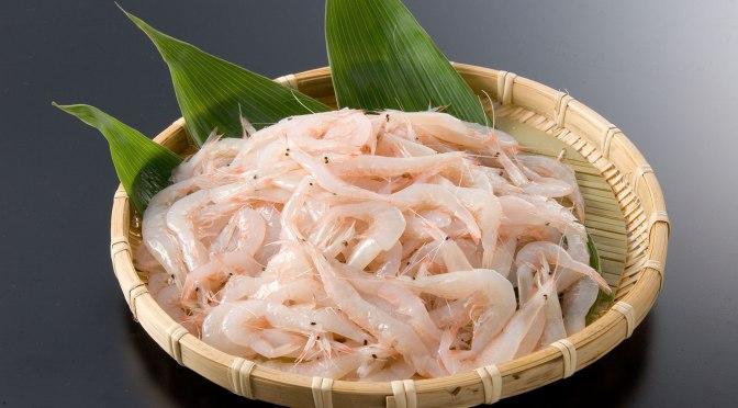 Japanese Crustacean Species 1: Shiro Ebi-White Shrimp