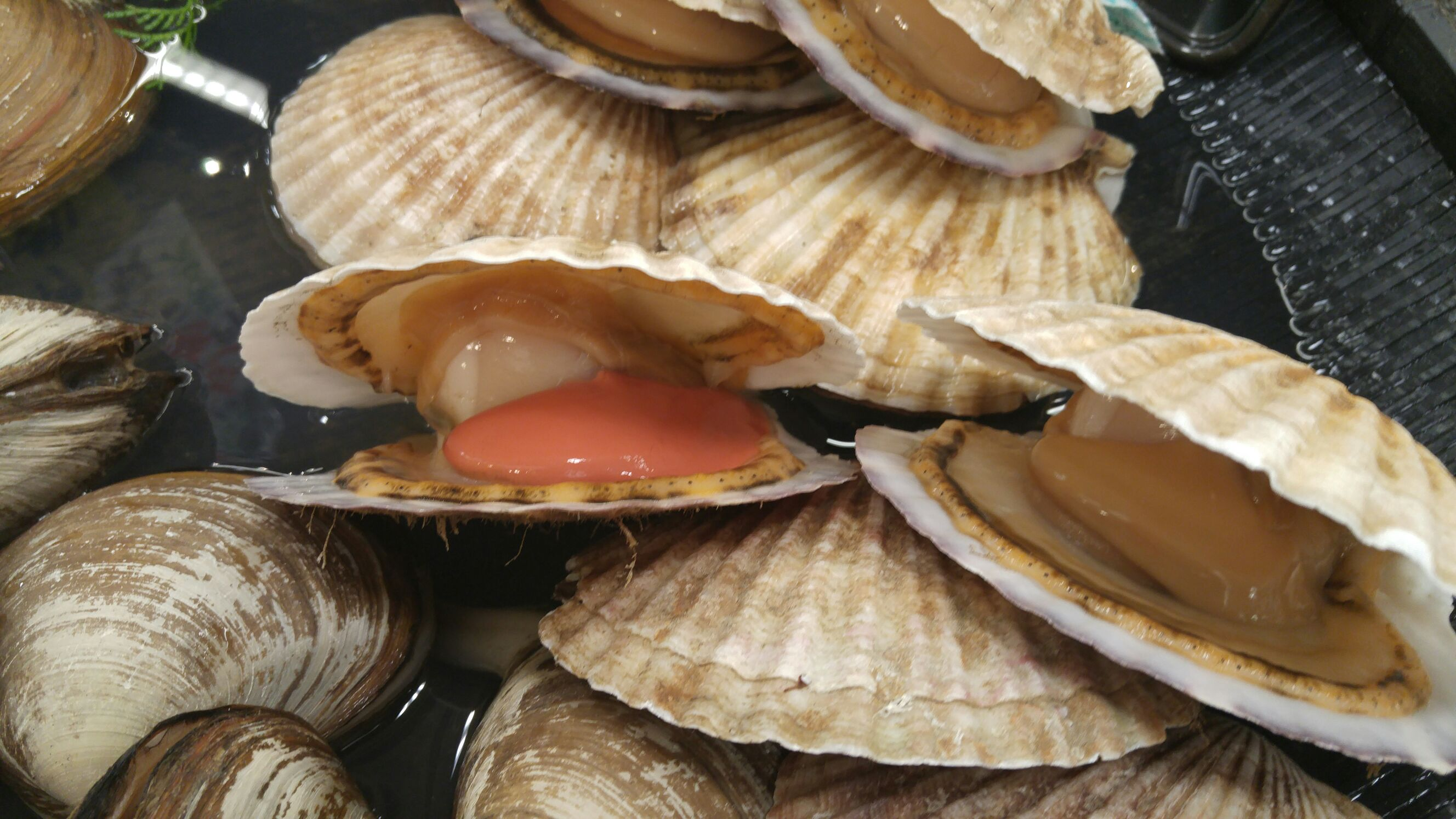 SHIZUOKA GOURMETCategory Archives: ShellfishShellfish at Shizuoka Parche Fish Market!Marine life & Food Stock Preservation: Farm-bred Abalones to be put on the Market soon!Japanese Shellfish Species 12: Surf Clam-Ubagai-姥貝Japanese Shellfish Species 10: Ark Shell-Bloody Clam-Akagai-赤貝Jaoanese Shellfish Species 9: Round Clam-Hen Clam/BakagaiJapanese Shellfish 7: Clam-Hamaguri-蛤Japanese Shellfish 6: Turbo Shells-Sazae-栄螺Posts navigationPopular ArticlesArchivesCategoriesPagesBeerBeer BrewingBlogrollfavourite BlogsFranceGastronomyHealthHollandIrelandJapan Information WebsitesJapanese Cuisine RecipesLiens francaisLife in JapanLiquor ShopsMy favourite websitesMyother Blogs/websitesRecommended sushi restaurants in the World!sakeshochusushiSwedenTravelWhisky日本語のブログ